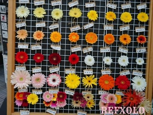 ガーベラの花標本